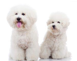 מברשת לכלבים
